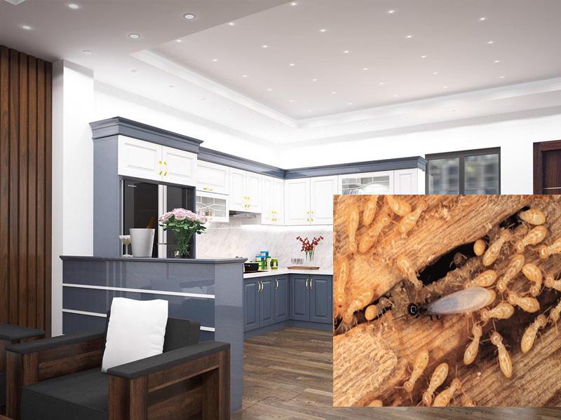 Nội thất gỗ công nghiệp có bị mối mọt hay không?